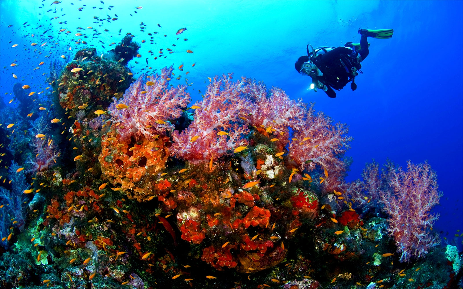 Diving - Red Sea